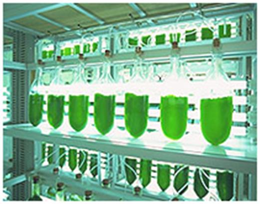 rask ned i vekt Grønne energipiller