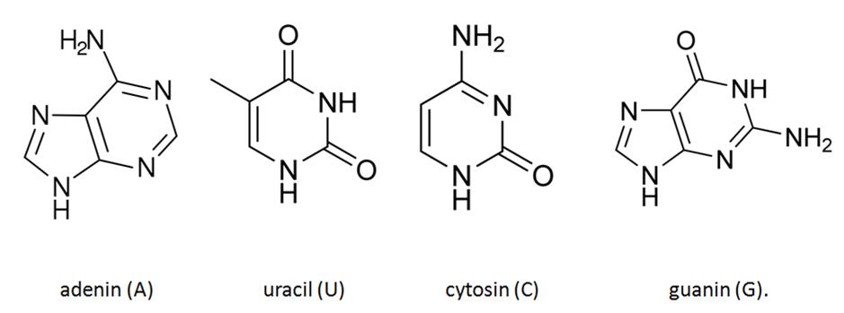 adenin guanin cytosin tymin