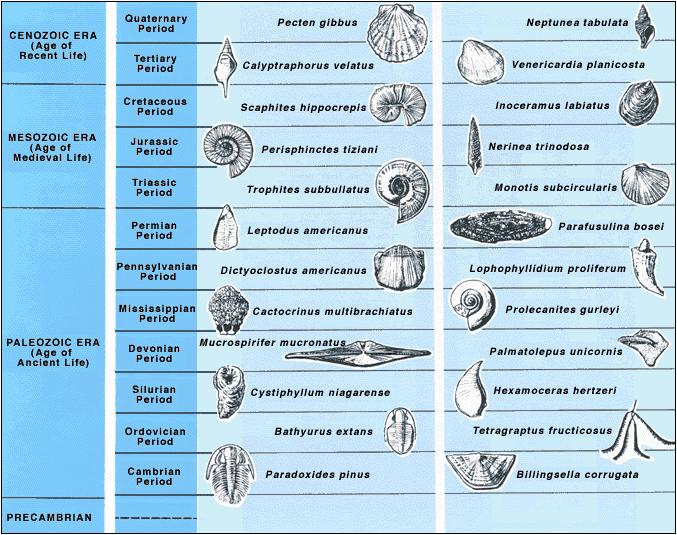 fossiler fra kambrium